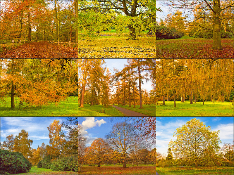 """sam1461 - Autumn Colors  Exif: <a href=""""http://www.flickr.com/photos/12586695@N04/sets/72157625492924924/"""" target=""""_blank"""">EXIF</a>"""