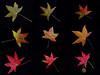 dnie - Shades of Fall