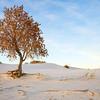 dlplumer - Golden Tree On White Sands