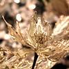Larkphoto - Glitter