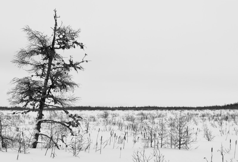 rbustraen - No Ordinary Tree