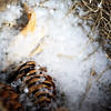 "sweetharmony - Winter Nest with Snowflakes Exif:  <a href=""http://sweet-harmony-photography.smugmug.com/gallery/12147303_JFZub/#1177363816_pzAa8-A-LB"" target=""_blank"">EXIF</a>"