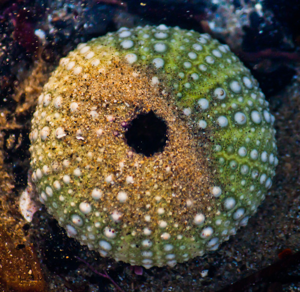Luxbug - Looking Over an Underwater Sea Urchin