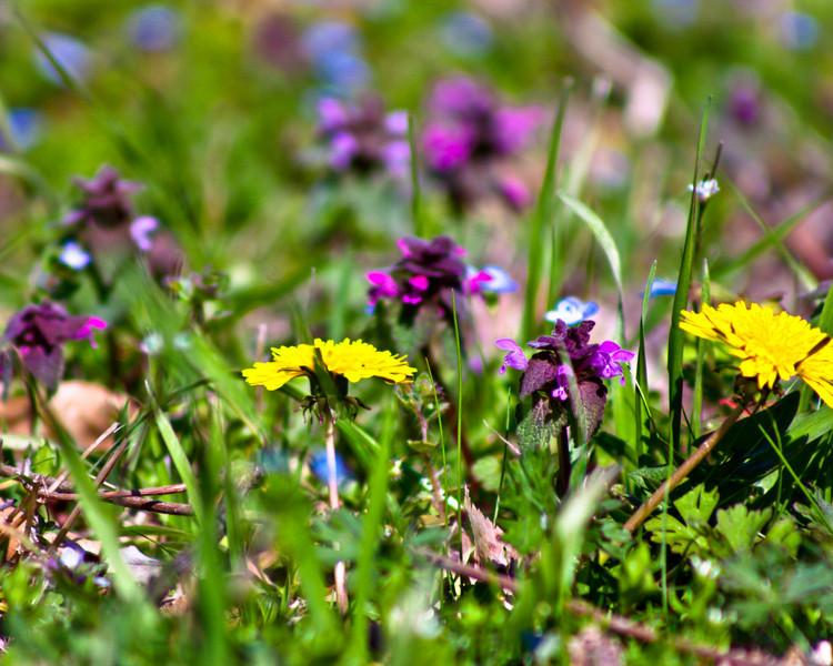 rteest42 - Spring Carpet Underfoot