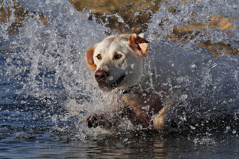 cromwell - Rushing Through The Water