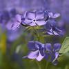 kdotaylor - Woodland Flowers