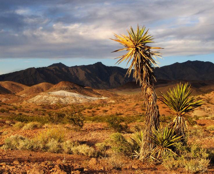 Kolibri - If the Yucca could talk....