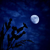 "sweetharmony - Night-bloomer Greeting Moonlight at the End of the Day Exifs:  <a href=""http://sweet-harmony-photography.smugmug.com/Private/Dgrin/12147303_JFZub#1334399449_gdF8Q65-A-LB"" target=""_blank"">EXIF</a>             <a href=""http://sweet-harmony-photography.smugmug.com/Private/Dgrin/12147303_JFZub#1334399418_mbSmX9R-A-LB"" target=""_blank"">EXIF</a>             <a href=""http://sweet-harmony-photography.smugmug.com/Private/Dgrin/12147303_JFZub#1334399386_Q6QtX5g-A-LB"" target=""_blank"">EXIF</a>"