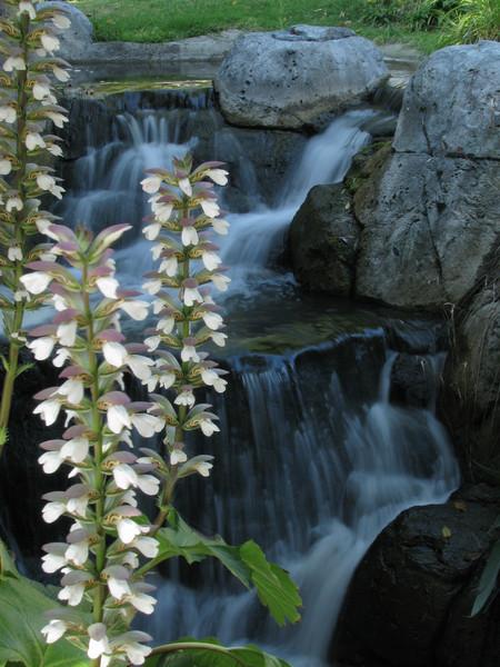 PedalGirl - Serene Waterfalls