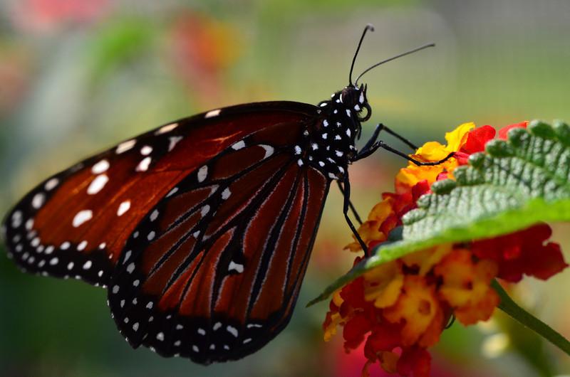 Memol - Vibrant Wings
