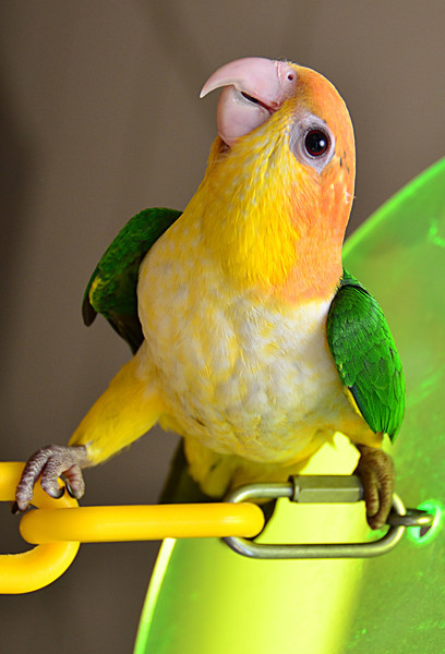 Memol - Acrobat Bird against Gravity