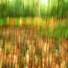 "Johnloguk - ""Impressions of Autumn"""
