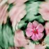 """dlscott56 - Garden  <a href=""""http://4scotts.smugmug.com/photos/newexif.mg?ImageID=1473902573&ImageKey=T8cVCkq"""">exif 1</a> <a href=""""http://4scotts.smugmug.com/photos/newexif.mg?ImageID=1473901714&ImageKey=Ksb4T2b"""">exif 2</a>"""