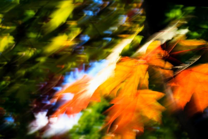 sapphire73 - Embracing Autumn