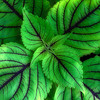 kdotaylor - Greenery