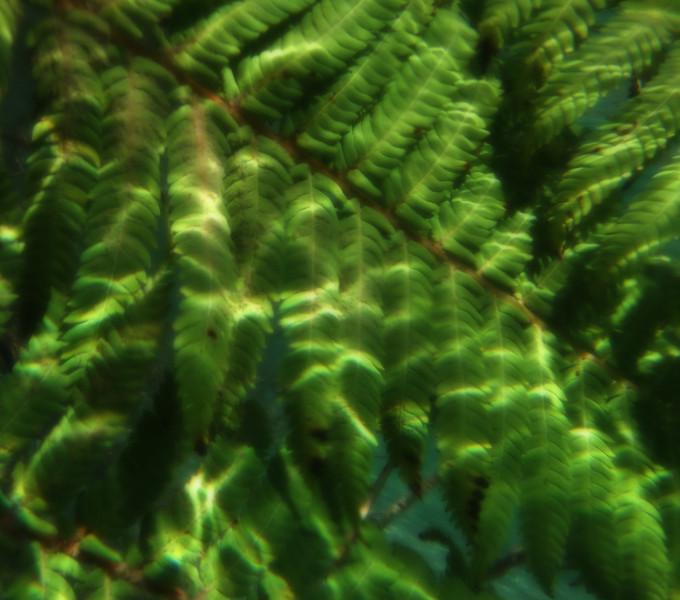 torrbrae - Underwater Fern