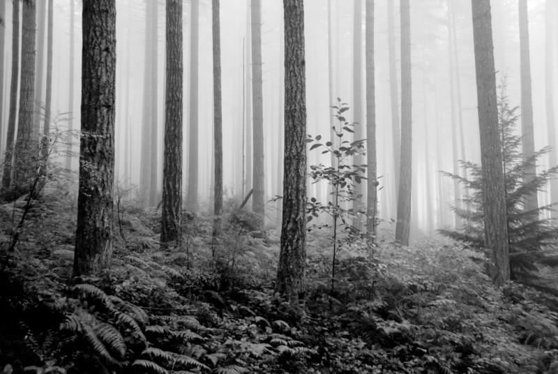 WillowChandler - Vanishing Point