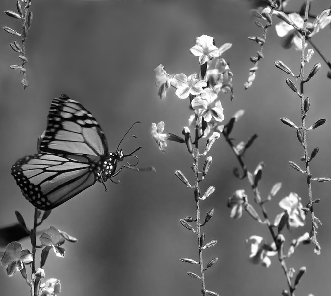 jwear - Butterfly in the pursuit of pleasure