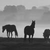 AndMan - Equine Dawn