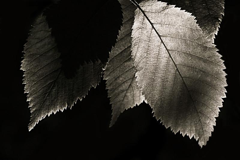 kdotaylor - Leaves
