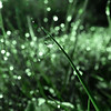 WhatSheSaw - Green Light