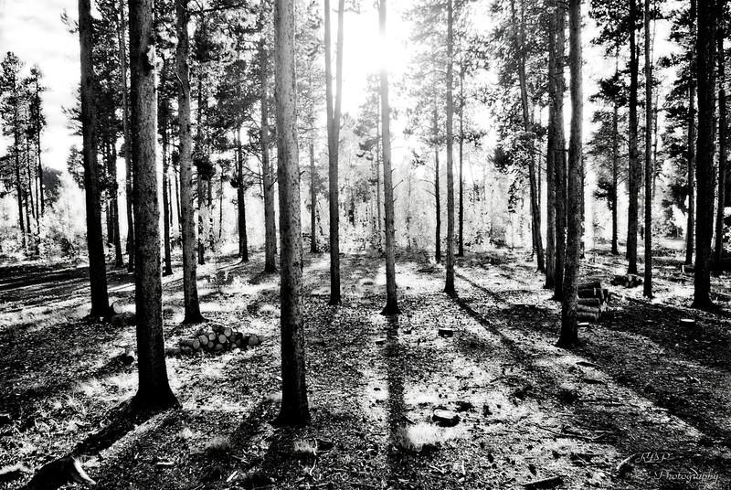 MUDDOGBOB - The Dawns Emanation
