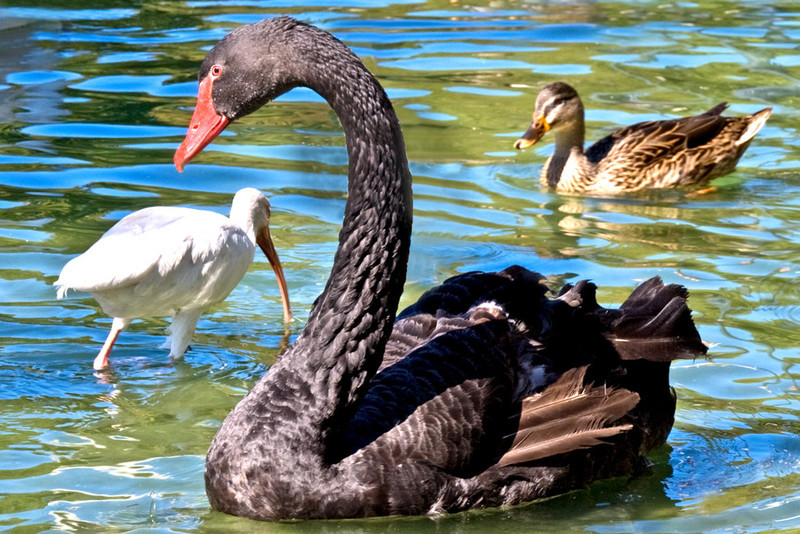 TonyCooper - Three Birds A'Floating