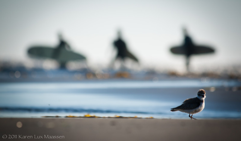 Luxbug - Surfer Spirits