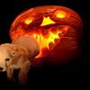 cbbr - Halloweenie