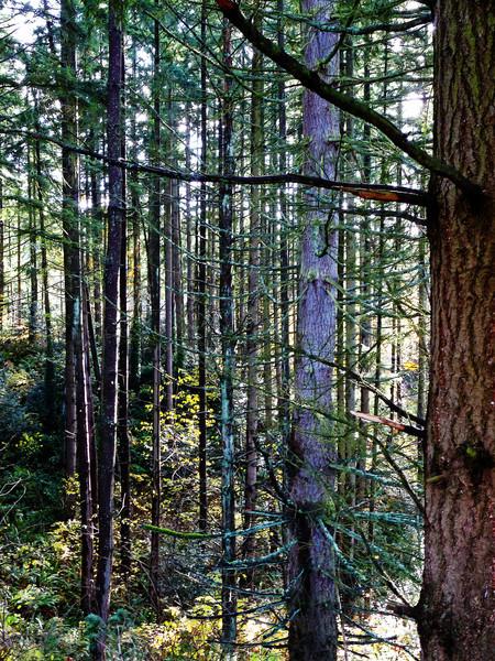 WhatSheSaw - Wild Wood