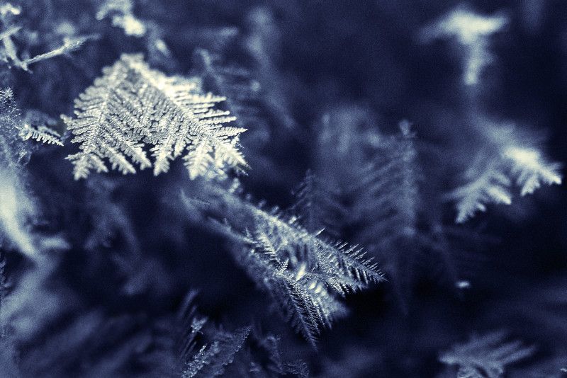 tinamarie52 - Hoar frost crystals
