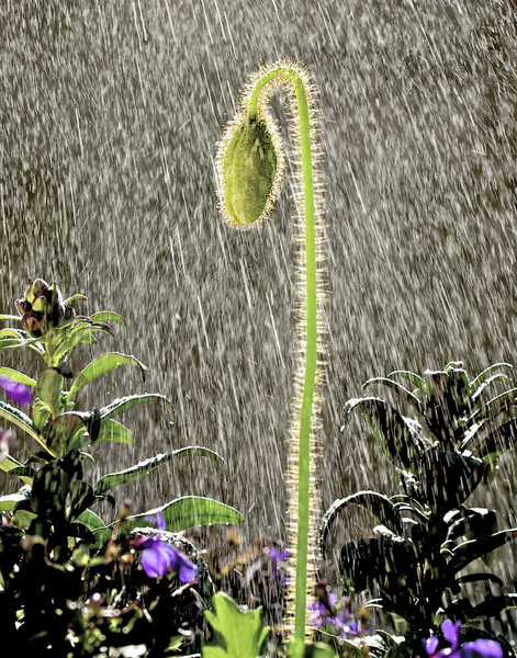 GretaPics - rain brings forth new life