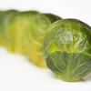 The Curious Camel - Brussel Sprouts