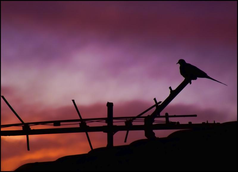 PedalGirl - Lonesome Dove