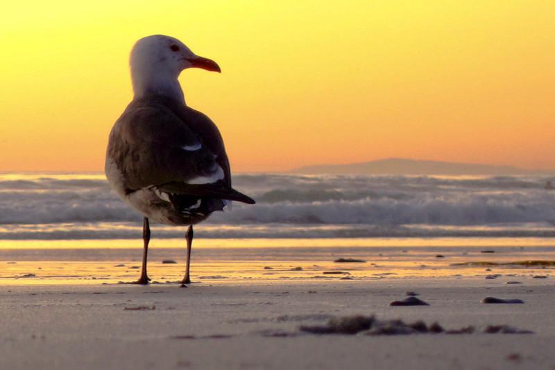 memol - Enjoying Sunset