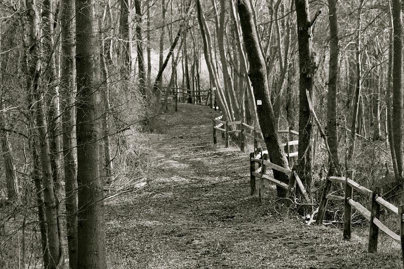 mommajojo - vanishing path