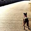 sweetharmony - June and Roger on Lockport Bridge