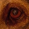 """kwickers - Dante's Vision <a href=""""http://photos.keithwickersham.com/photos/newexif.mg?ImageID=1733183577&ImageKey=cXDk8WS"""">EXIF</a>"""