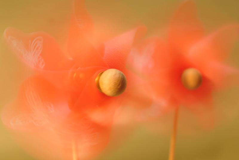 SeascapeS - Pink Pinwheels