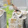 grandmaR -And a mossy stone.... Here dwell alone