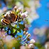 photo-funtasia - Full of fresh scents
