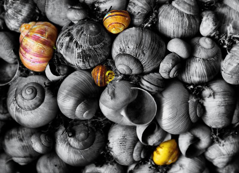 kentwaller - shells