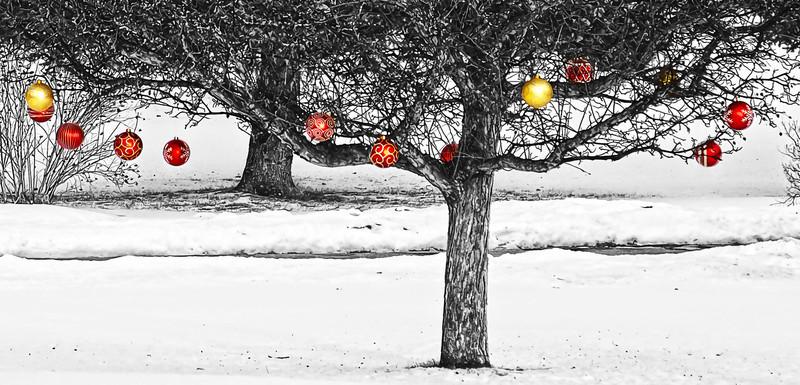 travelways - Winter fruit