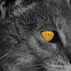 superduckz - The Solar Cat