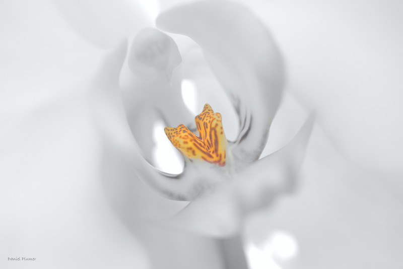dlplumer - Essence Of Orchid