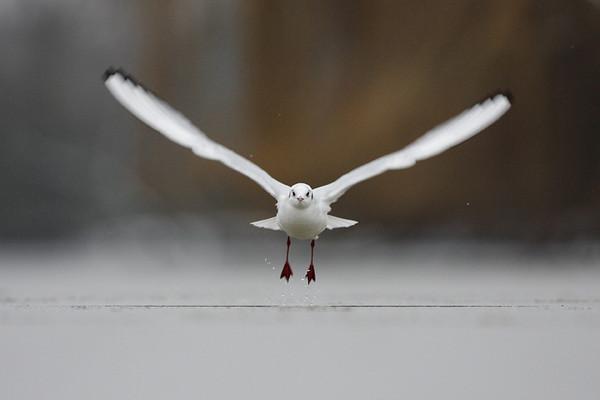 puzzledpaul - snowbird
