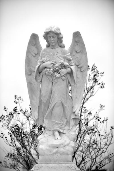 cbbr - Angelic