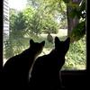 lkbart - Purrtection from Peeping Tom