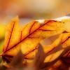 kdotaylor - Last Leaf Raked