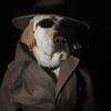 cromwell - Secret Agent